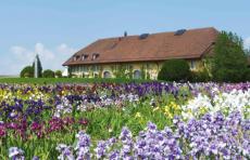 2017 05 19 Chateau de Vuillerens à Mont-sur-Rolle